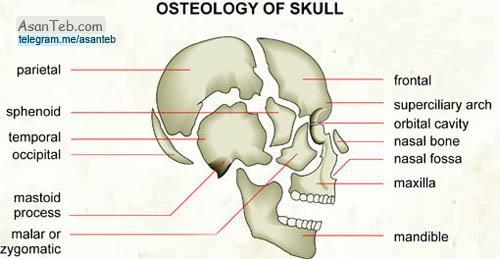 استخوان اتموئید یا استخوان پرویزنی