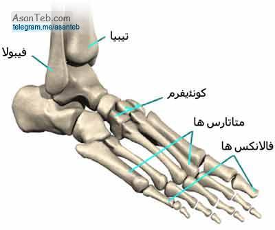 استخوان متاتارس