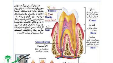 ساختمان دندان ها