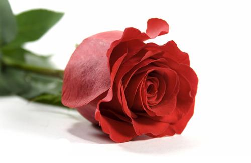 خواص گل سرخ چیست , فواید گل سرخ چیست