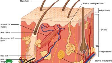 فیزیولوژی موها
