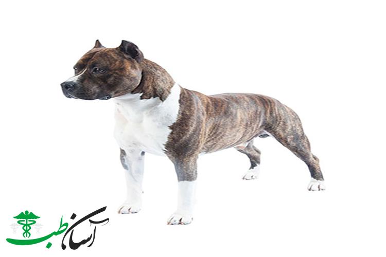 تصمیم در مورد نگهداری از سگ نر یا نگهداری از سگ ماده