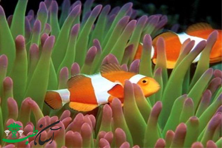 آشنایی با انواع مختلف ماهی های آکواریومی گوشتخوار یا اهلی
