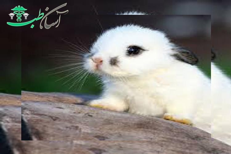 اهمیت زبان خرگوش و یا زبان بدن خرگوش
