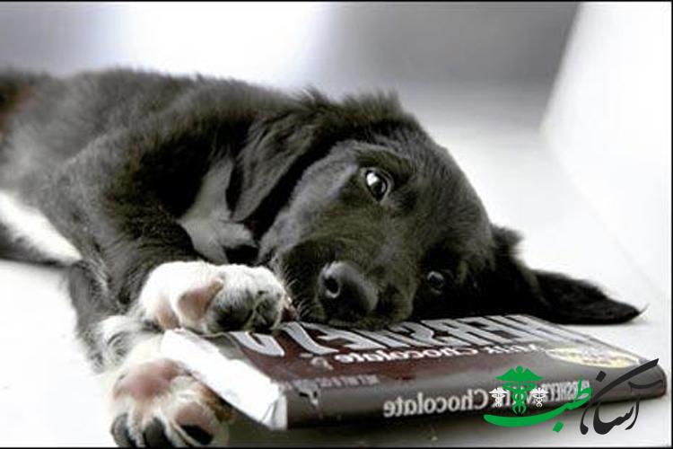 مسمومیت در سگ و 26 ماده غذایی مسمومیت زا و کشنده