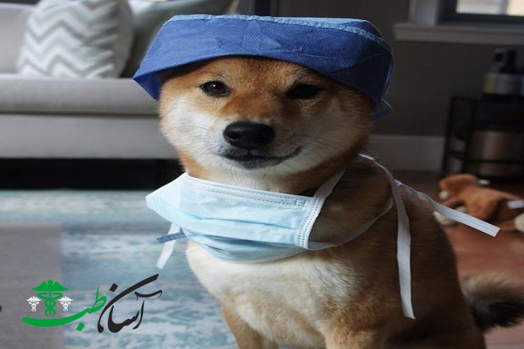 10 نوع از مشکلات پزشکی و یا بیماری سگ ها