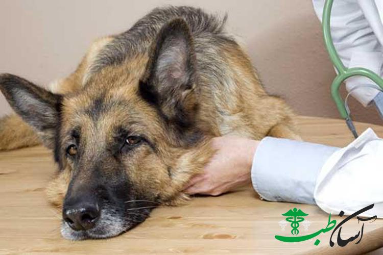 مسمومیت در سگ ها با حشره کش ، علائم و درمان آن