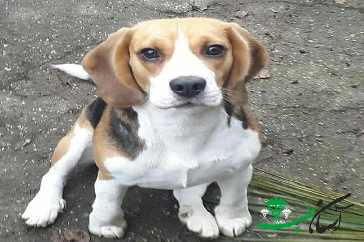 بررسی 4 نکته ی مهم در انتخاب جنسیت سگ ها