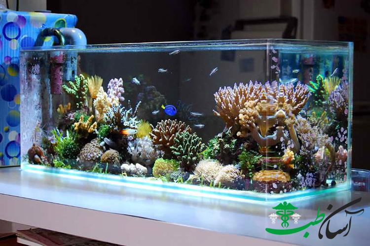 آشنایی با قسمتهای داخلی یک آکواریوم آب شور مرجانی