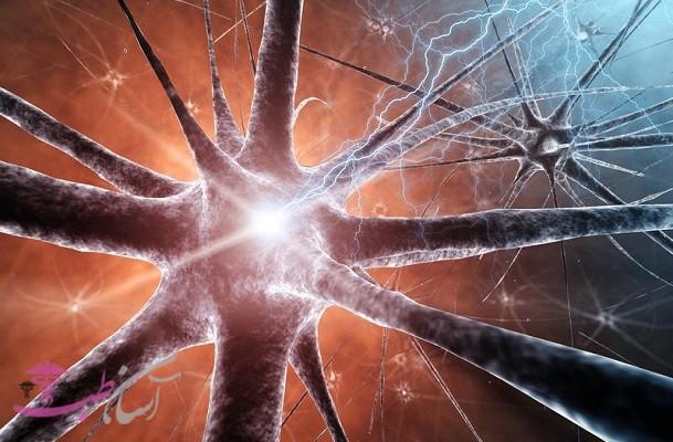نورونها