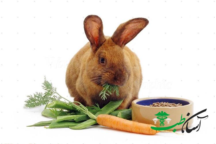 مراحل،شرایط و دو فاز تولید مثل در خرگوش های بچه زا