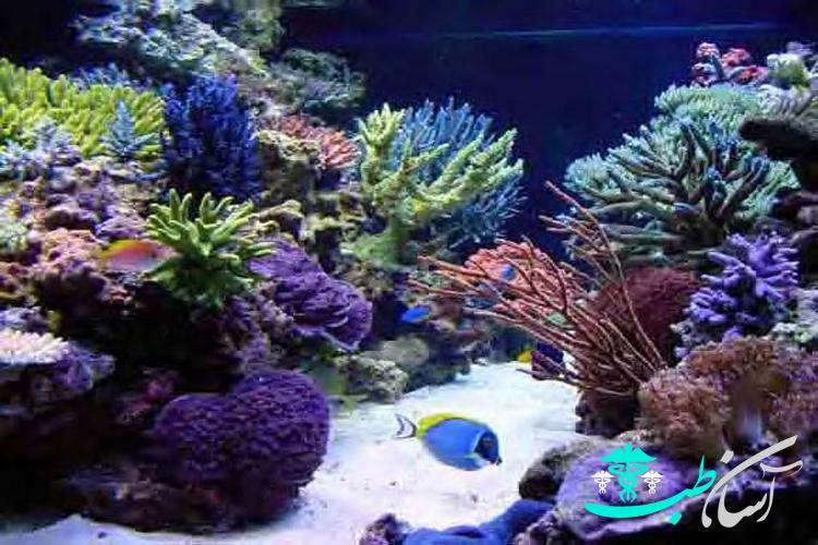 آشنایی با قسمتهای خارجی یک آکواریوم آب شور مرجانی