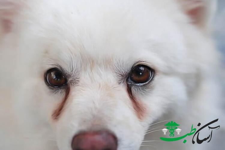 عفونت چشم سگ
