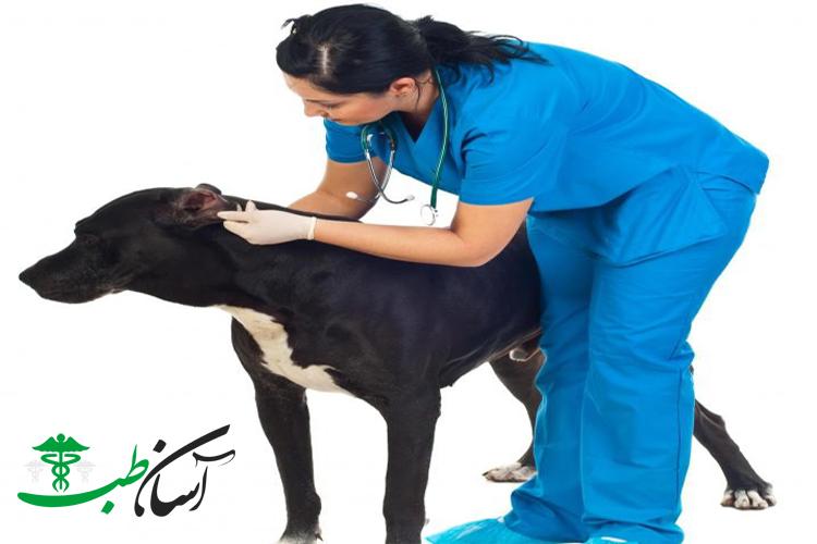 تشنج در سگ ها ، علائم و روش تشخیص دقیق بیماری در سگ ها - آسان طب
