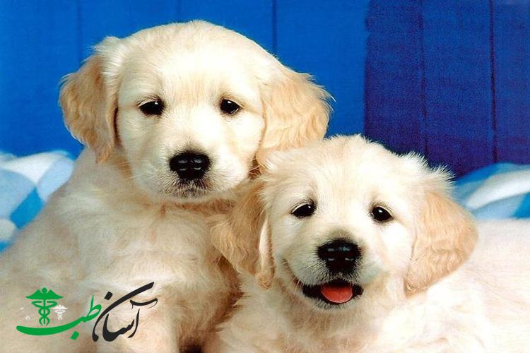 شیوه نگهداری صحیح از نژاد سگ ترکیبی گلدادور
