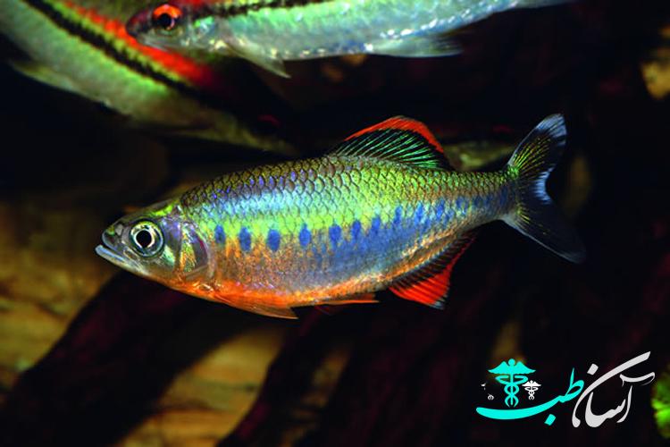 5 مورد در مورد روش صحیح نگهداری از ماهی پانچاکس