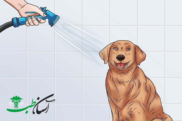 بیماری کنل کاف ، آشنایی با بیماری کنل کاف در سگها ، علائم و روند درمان این بیماری - آسان طب