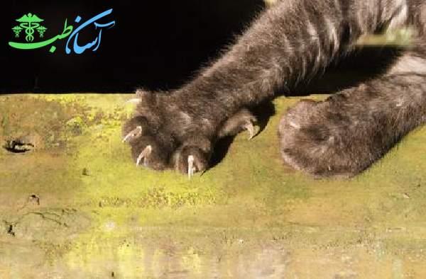 بیماری گربه