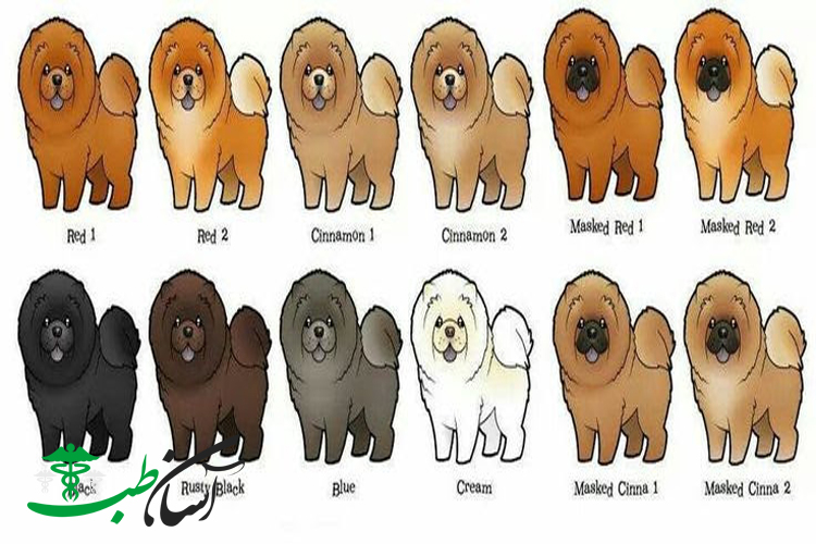 سگهای چاو چاو و مراقبت و نگهداری اصولی از نژاد سگهای چاو چاو - آسان طب