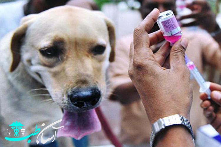 واکسن های سگ و 3 نوع از واکسن های سگ موجود در ایران (هاری، پاروا،کورونا) - آسان طب