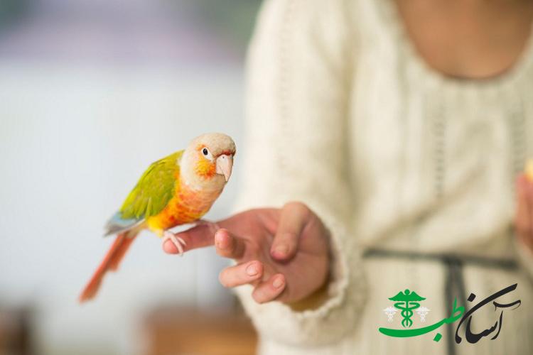 استفراغ پرندگان ، تشخیص استفراغ کردن و یا برگشت غذا در پرندگان خانگی - آسان طب