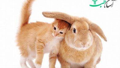 ارتباط خرگوش با سایر حیوانات