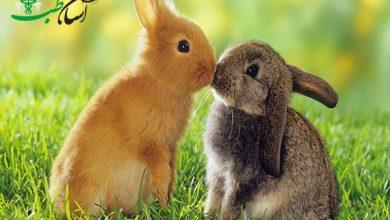 روابط خرگوش ها