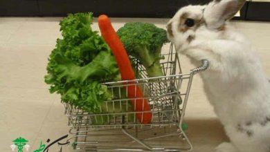سبزیجات برای خرگوش