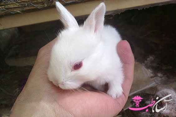 تولد بچه خرگوش