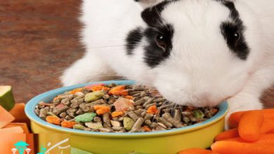 پلت برای خرگوش