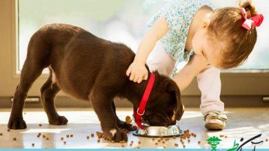 غذای حیوانات خانگی