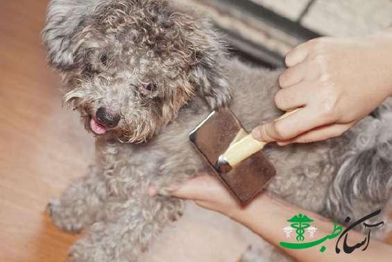 گره خوردگی در مدل موی سگ