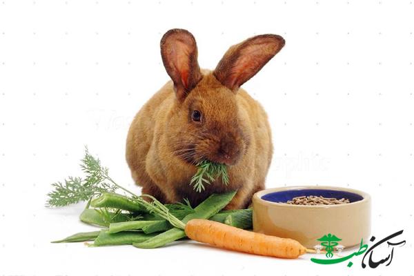 تغذیه خرگوش ها
