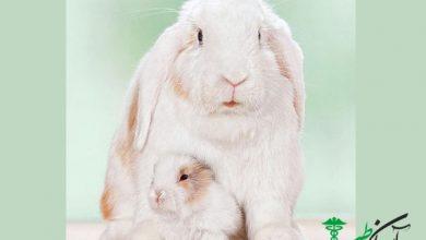 مراقبت از خرگوش های ماده باردار