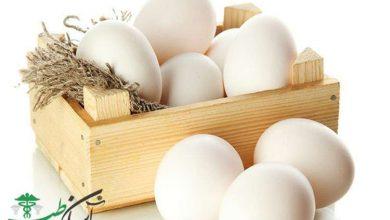 رژیم غذایی تخممرغ