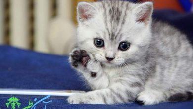 نگهداری از بچه گربه کوچک