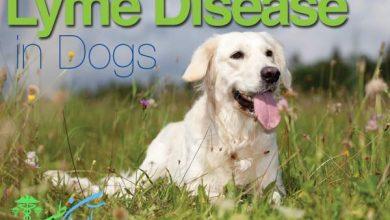 بیماری لیم در سگ ها