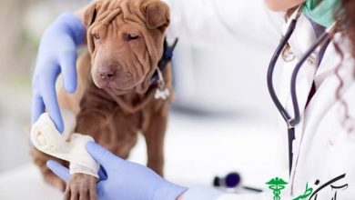 درماندیسپلازی مفصل در سگ ها