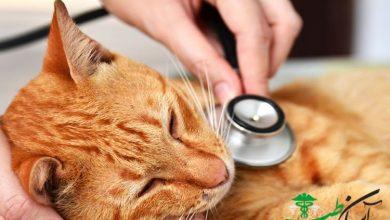 ویروس لوسمی در گربه ها