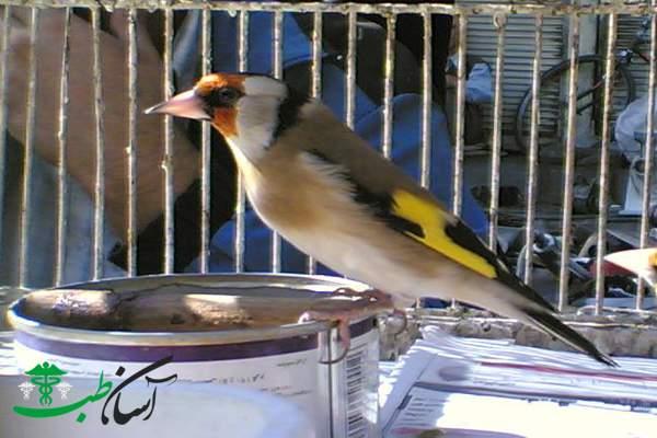 پرندگان در فصل تابستان