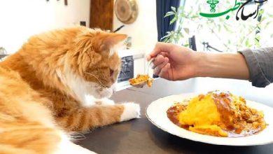 غذا های خطرناک برای گربه ها