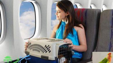 مسافرت هوایی با پرنده