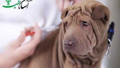 واکسیناسیون سگ ها