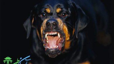 سگ های خطرناک دنیا