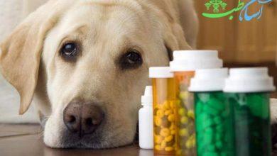 مسمومیت با آسپرین در سگ