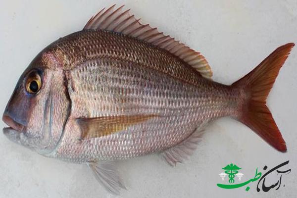 شانک ماهی ها