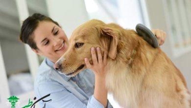 قانون سگ ها و بررسی 7 مورد از آنها در آمریکا و اروپا