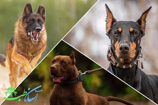 سگ های محافظ
