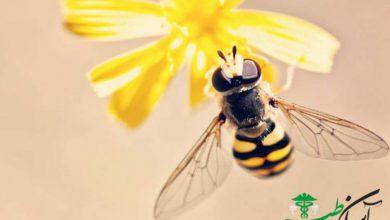 آلرژی زنبور عسل