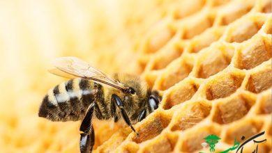 زنبوردرمانی